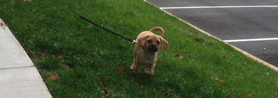 Borrowed Dogs: Wrigley